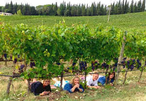 vineyard minibus tour with Sunflower Tours